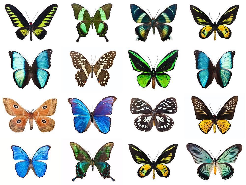 50年代的元素至今仍时尚到飞起,穿上它化身人间蝴蝶精灵!