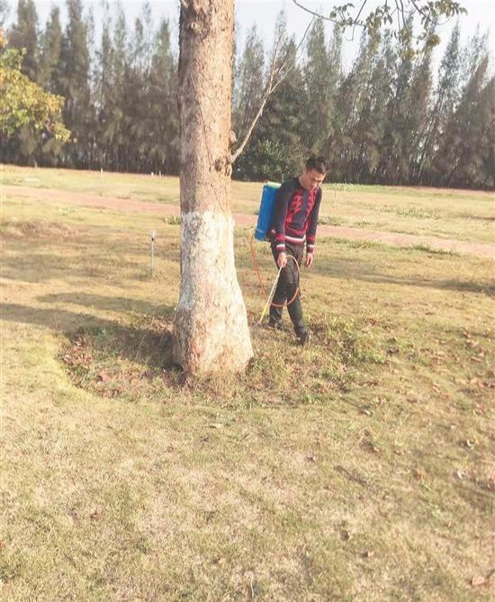 滨海公园:市民公园赏花 遭遇蚁窝扎堆