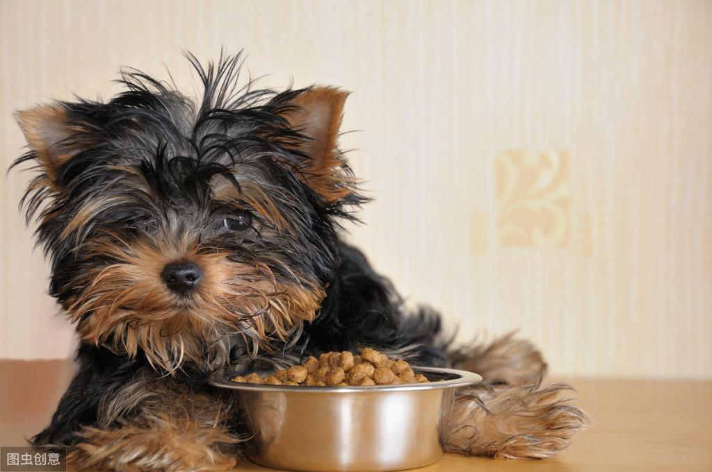 可以试着从狗狗呕吐物与便便排查情况,如果发现呕吐物中有虫子虫卵或者软便拉稀、便中有虫,那么毫无疑问是狗狗肚子里寄生虫在惹的祸.