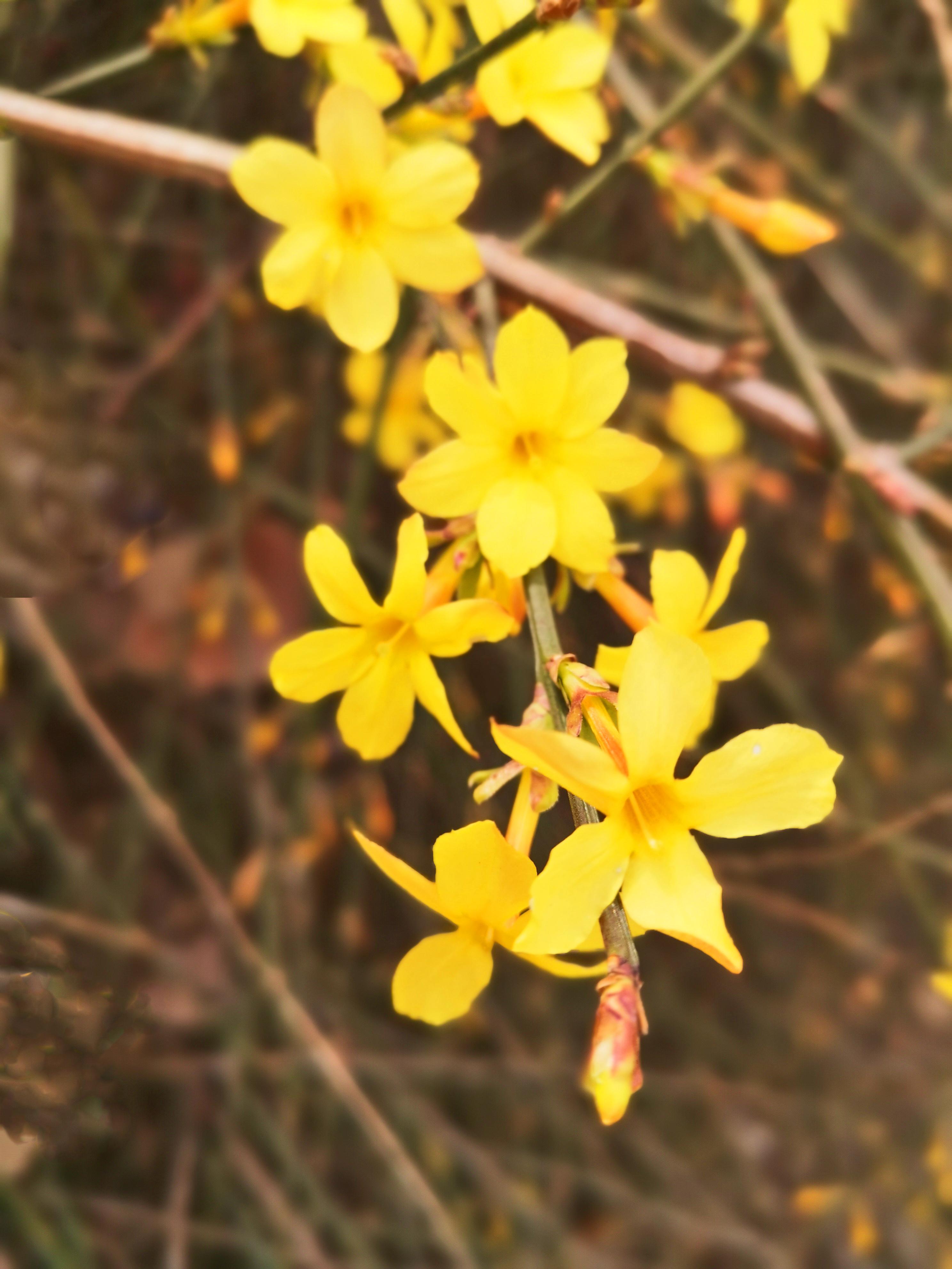 原创             我眼中的春天,院里春花烂漫,真是满园春色关不住
