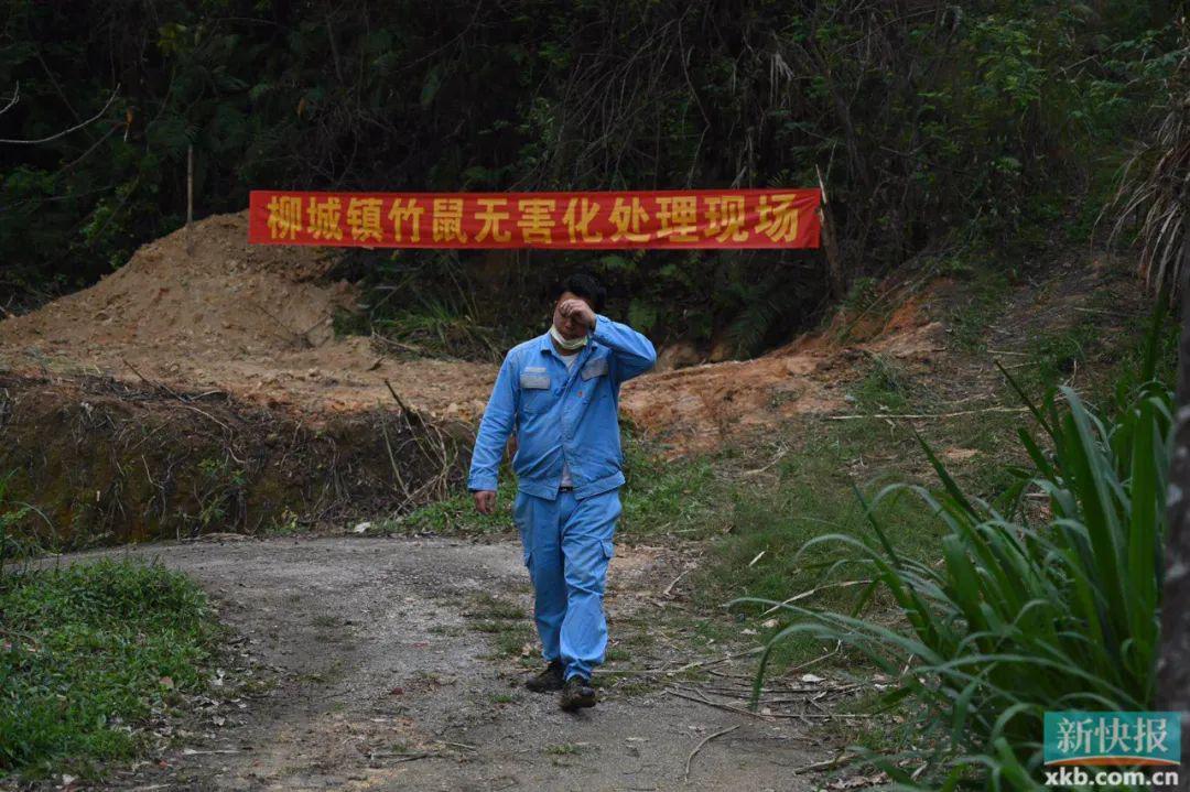 五月起施行!广东正式立法禁食野味,中华鳖、牛蛙等不受影响