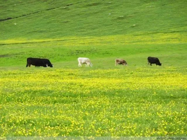 夏天的新疆,才是中国最美的地方!