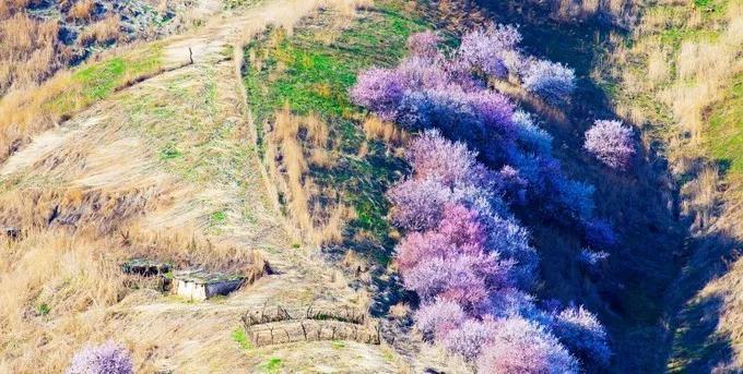 新疆的春天,简直逼疯摄影师!但99%的人不知道!