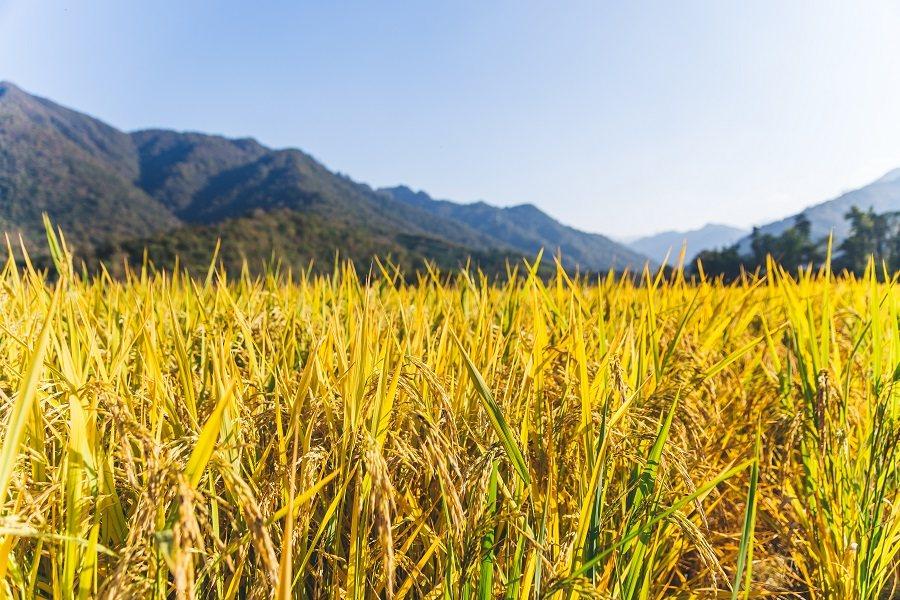多国紧急叫停!粮食危机或一触即发?