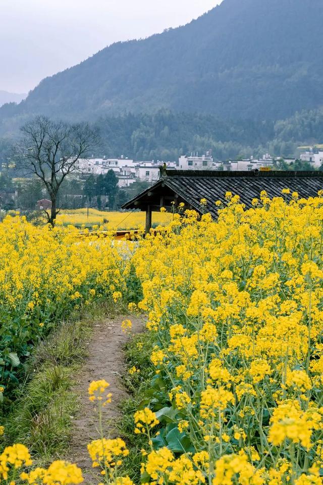 人间四月天,中国的春天有多美?