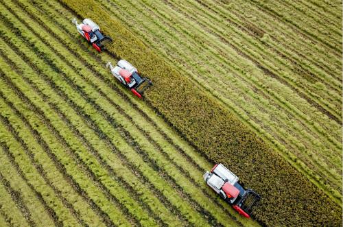 全球粮食市场面临冲击,三大国际组织呼吁避免破坏食品供应链