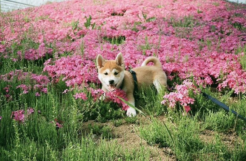 春天有100種拍攝方法,每種太太。太美了!