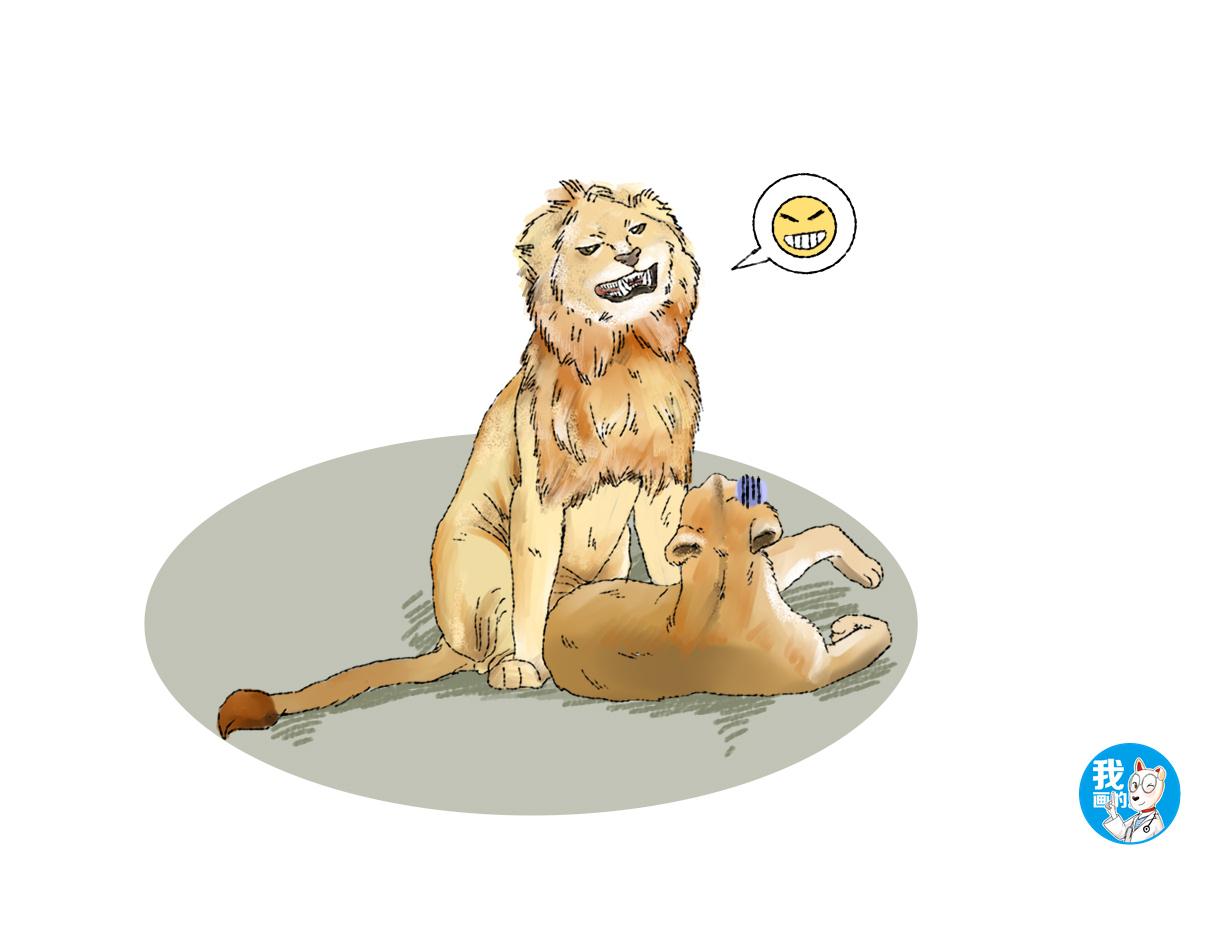 原创 公狮和母狮在打闹,凑巧被摄影师记录下来,狮子看了照片想打人