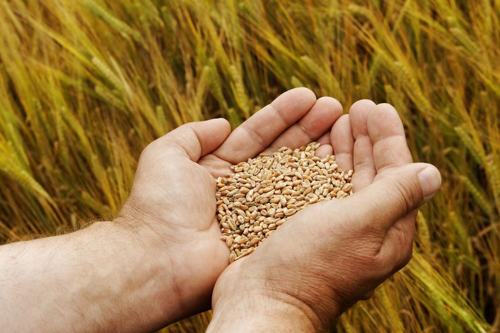 """多国禁止粮食出口 A股粮食板块先涨为敬,你的""""米袋子""""怎么样?"""