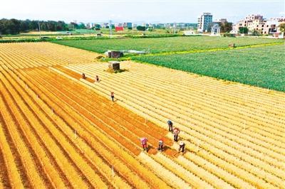 """今年农作物病虫害偏重,中国各地已提前做好准备""""虫口夺粮""""保丰收"""