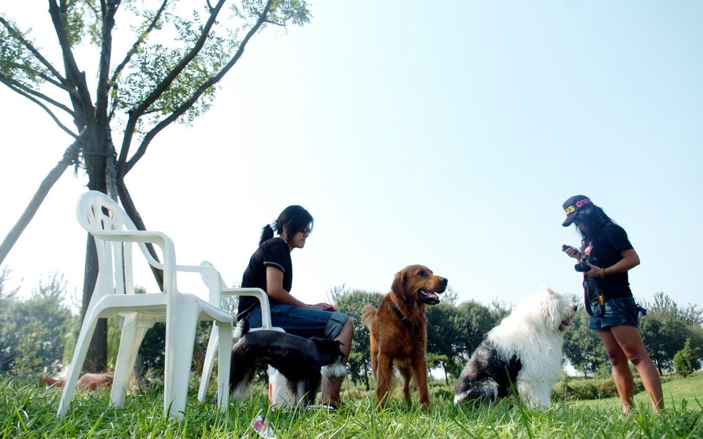 深圳立法禁食野生动物,明确猫狗进入禁食名单