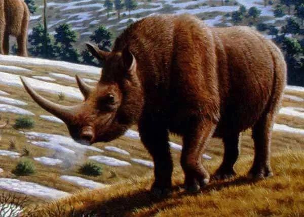 披毛犀和亚洲犀角的区别在哪?披毛犀角鱼籽纹能看见吗 网络快讯 第2张