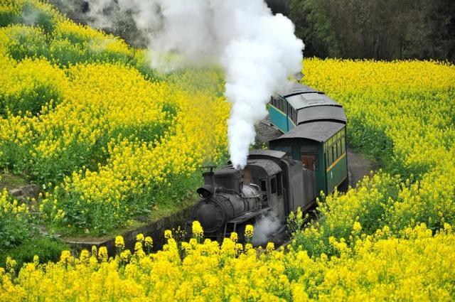 """6趟开往春天的""""国宝""""小火车!都是人间四月绝色!"""