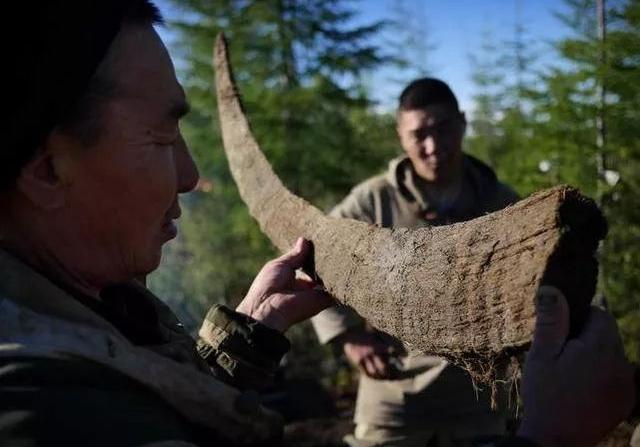 披毛犀和亚洲犀角的区别在哪?披毛犀角鱼籽纹能看见吗 网络快讯 第1张