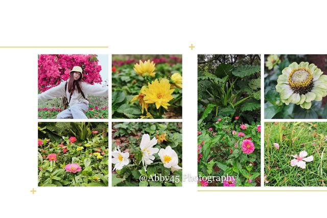 原创             你知道樱花和海一起有多美吗?跟我去厦门樱花谷,不错过这个春天