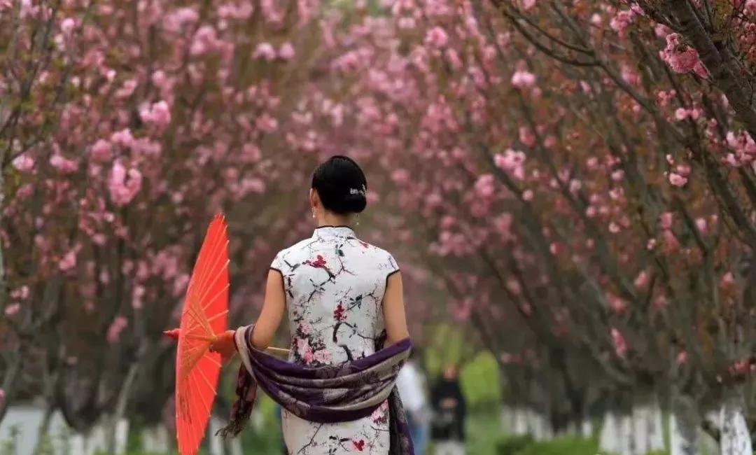 宛若仙境的紫藤花景,扬州春季网红打卡地
