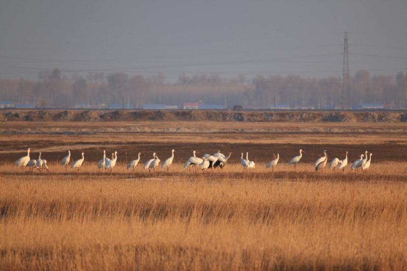 莫莫格保护区织就候鸟保护防护网