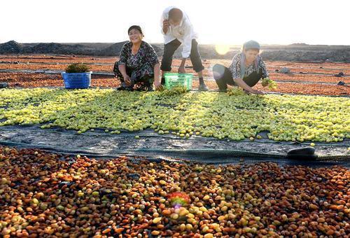 美食-新鲜葡萄和晒干后的葡萄干,哪种更有营养? 糖尿病患者要选对