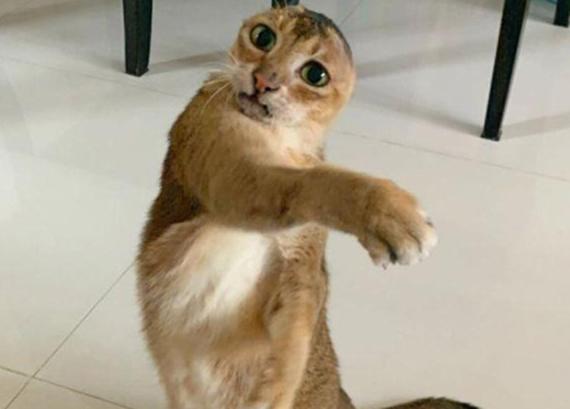 原创 铲屎官分享猫咪的照片,同伙还以为是恶搞,领会身世后泪目了