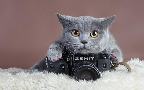 动物与相机独处