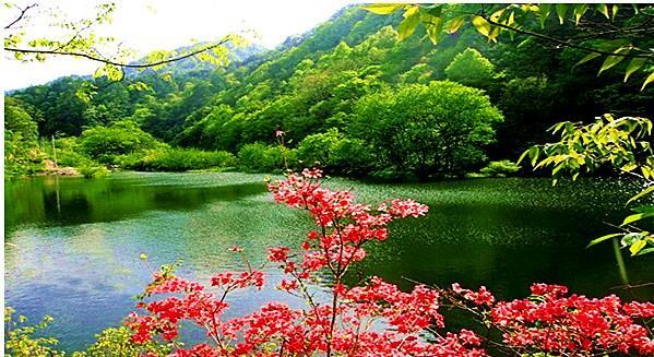 英山桃花冲森林公园景色绮丽,林密幽深秀丽