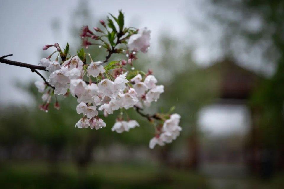 清明踏青,常熟的春天在哪里?(赏花门票免费送)