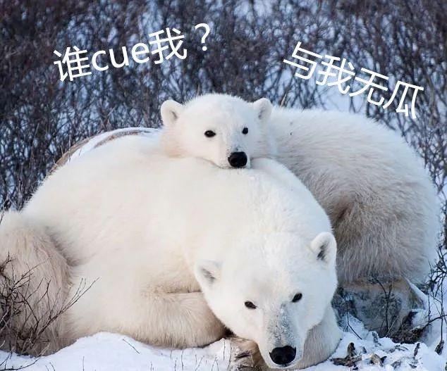 听说萨摩耶上辈子是只北极熊,看到这只狗之后,我信了!
