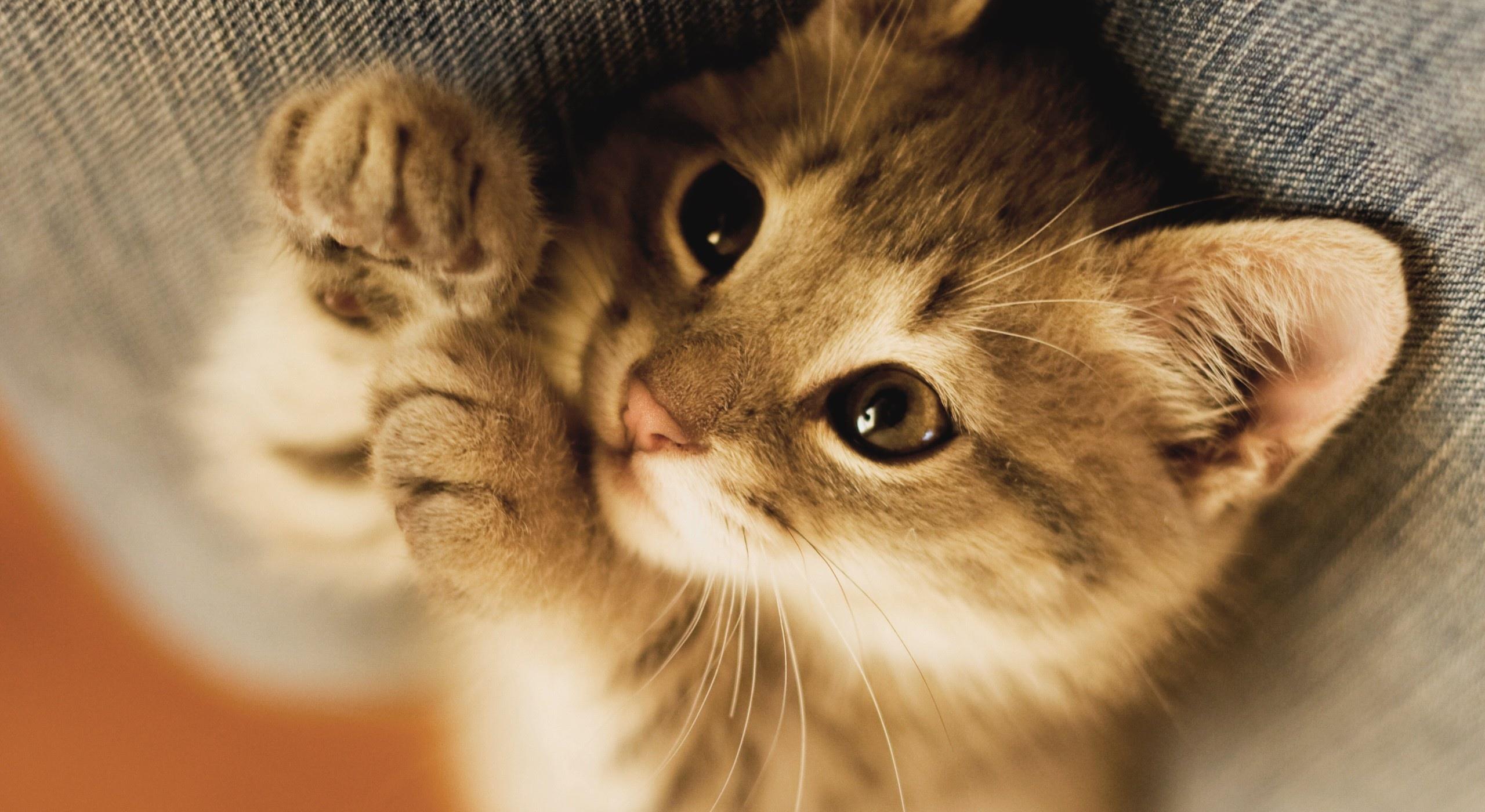 我是你可爱的小猫长相