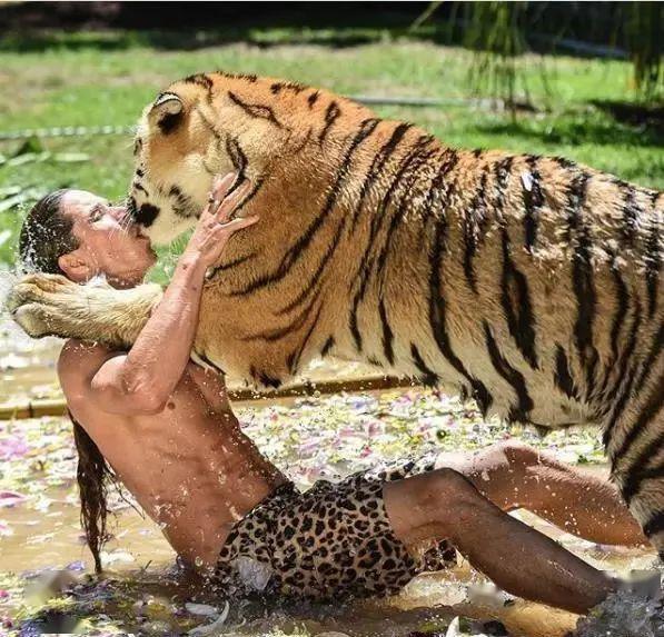 真人版泰山,男子和老虎打闹的画面,让人看了忍不住捏把冷汗!
