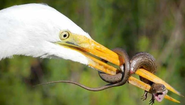 网友拍下蜥蜴逃生画面,网友直称:大开眼界