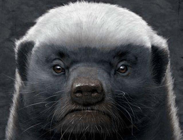 """世界上最记仇的4种动物,""""平头哥""""只是其中一种"""