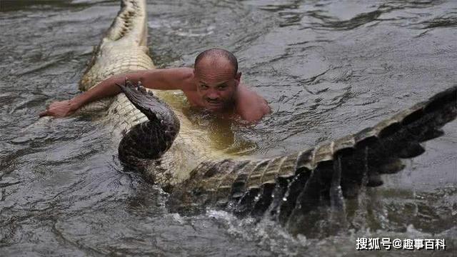 男子意外救了只鳄鱼,随后两人成了同伙亲密无间,网友:最强保镖!