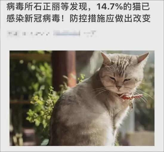 原创14.7%猫已感染新冠病毒?还会传染人?你更需要当心的是这件事