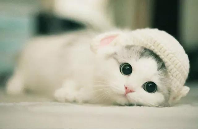 """猫咪的眼睛为什么有多种多样的颜色?为你揭秘神奇的""""猫眼"""" (图3)"""