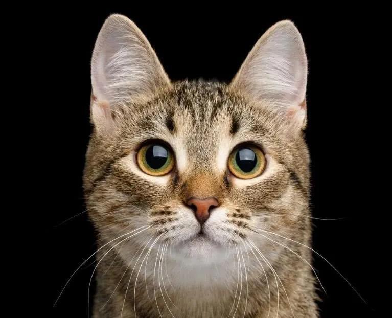 """猫咪的眼睛为什么有多种多样的颜色?为你揭秘神奇的""""猫眼"""" (图9)"""