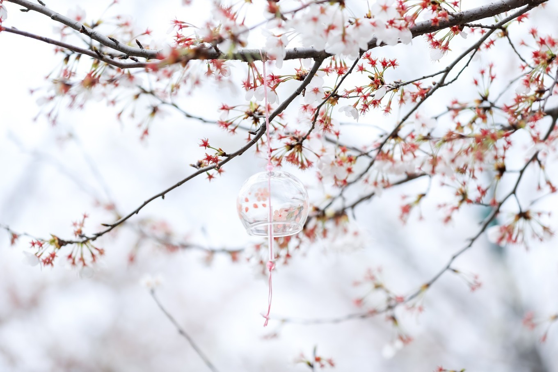 樱花烂漫时,相约大洋湾,邂逅最美春色