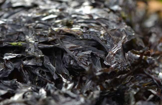 紫菜复合功用饮料配方技巧的研制