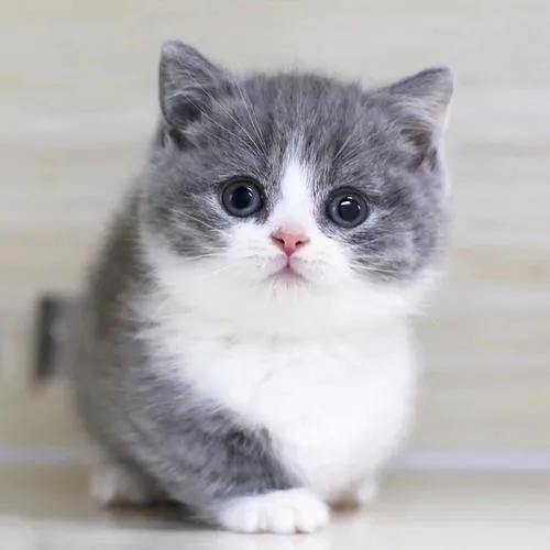 """猫咪的眼睛为什么有多种多样的颜色?为你揭秘神奇的""""猫眼"""" (图11)"""