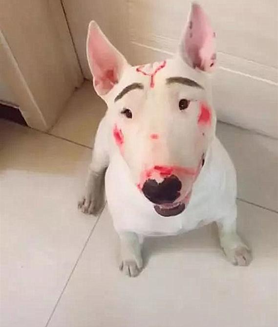 原创 女儿和牛头梗独自在家,竟把狗狗画成了如花,孙红雷看了想打人