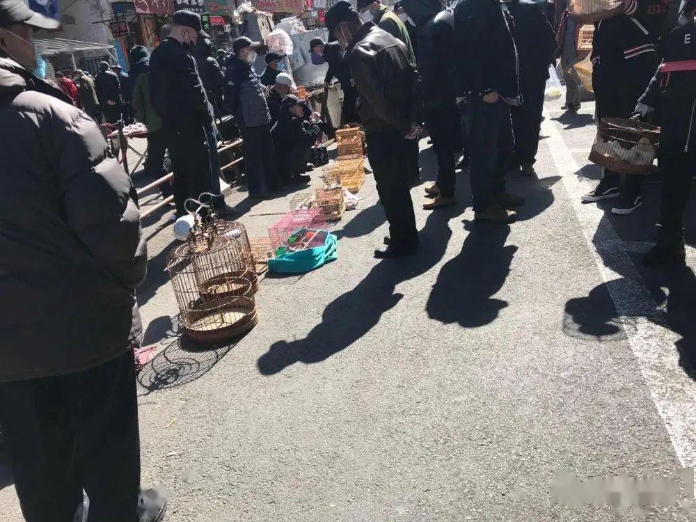 4月5日哈尔滨道外鸟市情况调查:接踵摩肩,群聚中多人不戴口罩