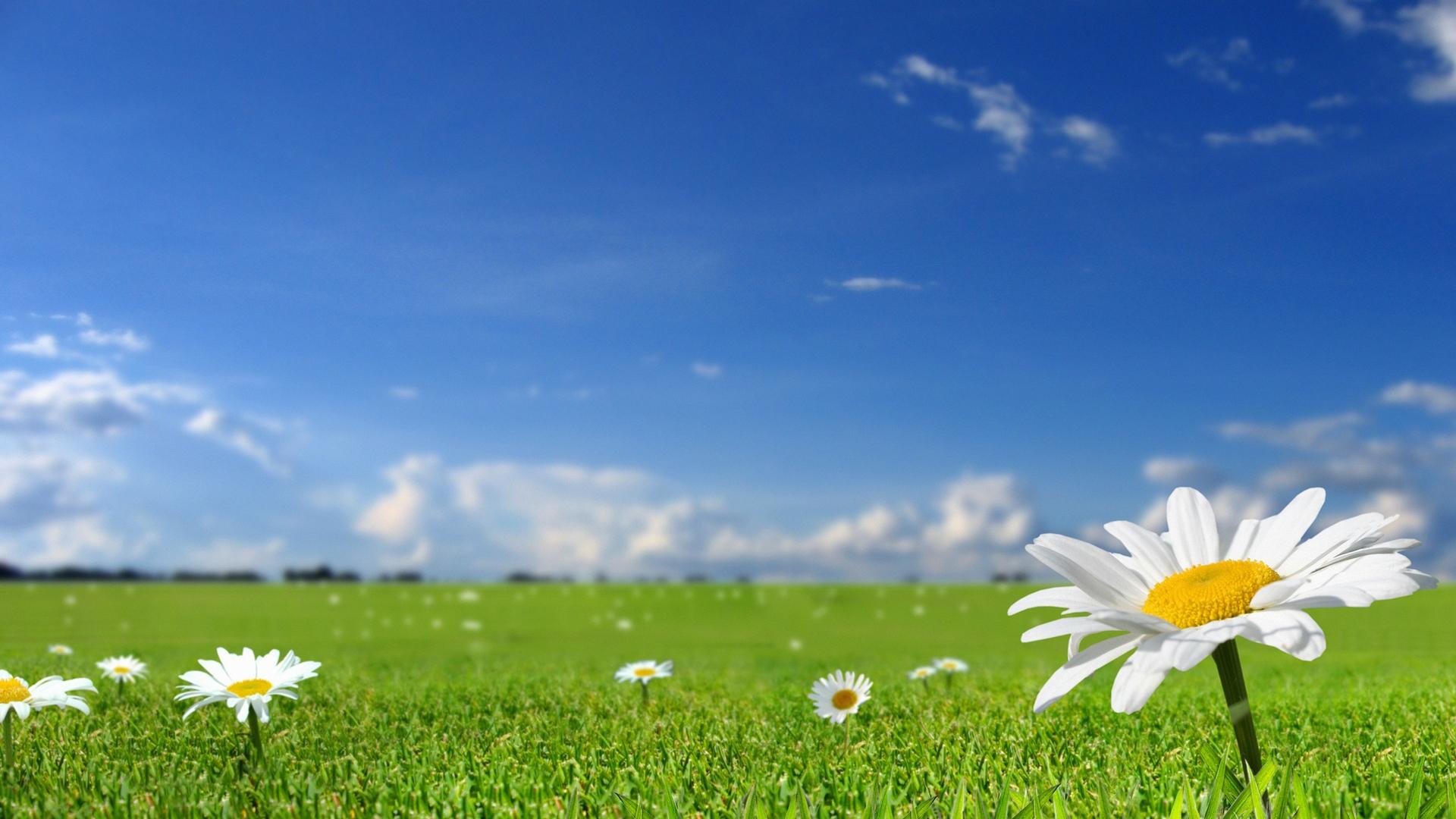 草地鲜花风景