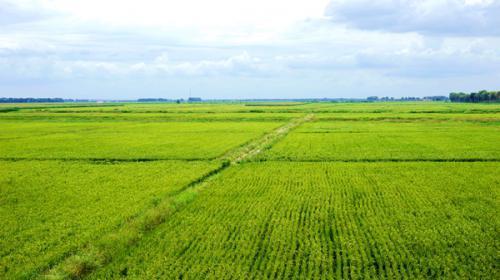 還用囤糧嗎?黑龍江今年將播種糧食作物2.15億畝,上年增近50萬畝
