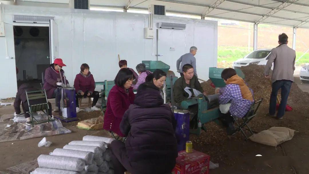【关注】嵩县饭坡镇汪城村:60亩香菇种植基地建成投用