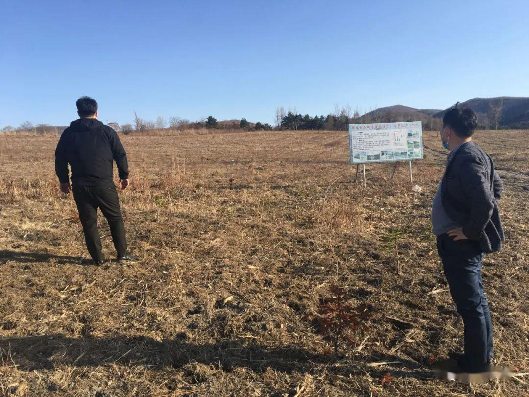 珲春市侵占林地问题点位整改取得成效