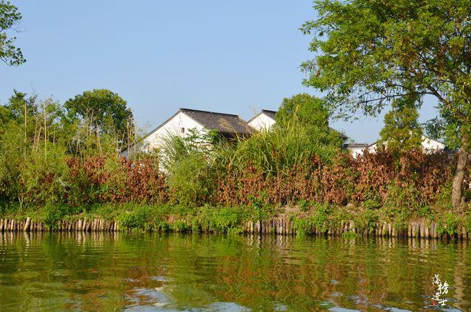 原创             杭州不仅有西湖,还有一处湿地公园,是国家5A景区,现在免费开放