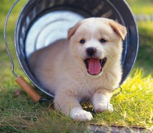 青岛开发区专业宠物托管哪家咳咳 西海岸宠物寄养价格