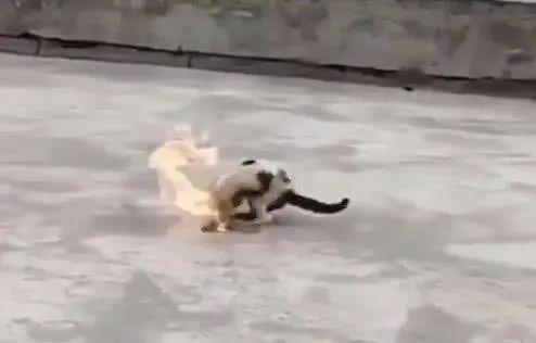 大学生虐杀流浪猫:完善立法补齐人性短板 | 新京报快评
