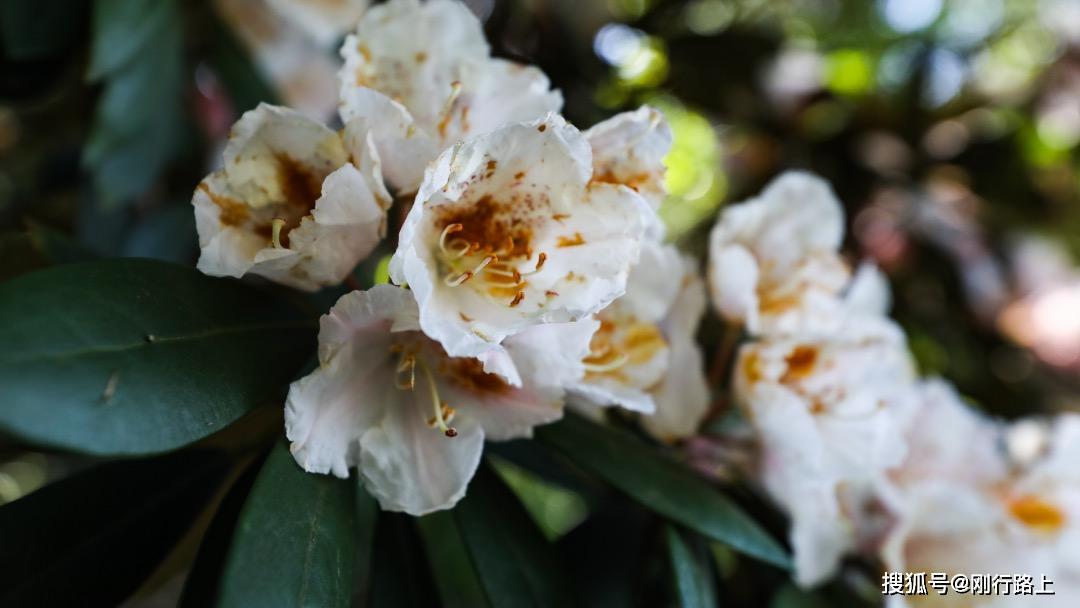 原创             春暖花开的季节里,体验三清山最好的四种方式,缺少一种都遗憾