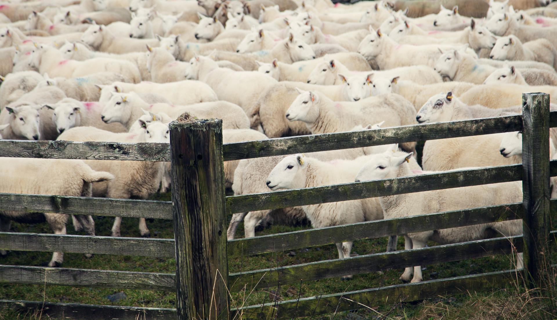 一件事后,生态环境局撤销对养殖户的加处罚款决定