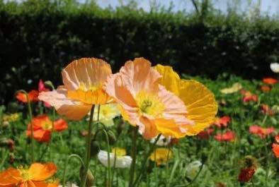 春暖花开过敏性鼻炎防治需知晓妙招